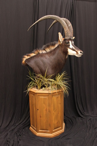 "Image of a 22"" taxidermy pedestal base from McGrath Woodworks, product code BSO-22, from the Bighorn Series"